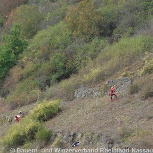 Manuelle Entbuschung von Weinbergsbrachflächen zur Offenhaltung