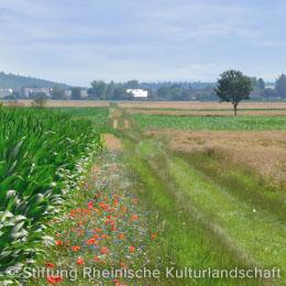 Blütenreicher Saum in der rheinischen Bördelandschaft
