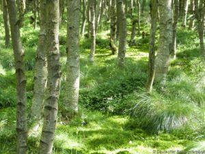 Moorgebiet Natura 2000
