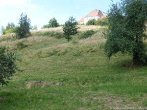 Weinbergsentbuschung Osterzgebirge