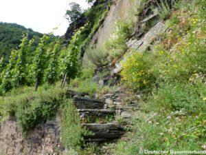 Steinstufen im Weinberg