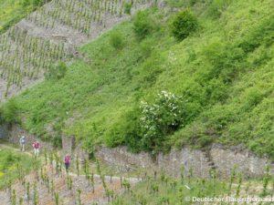 Tourismus in Weinbergen
